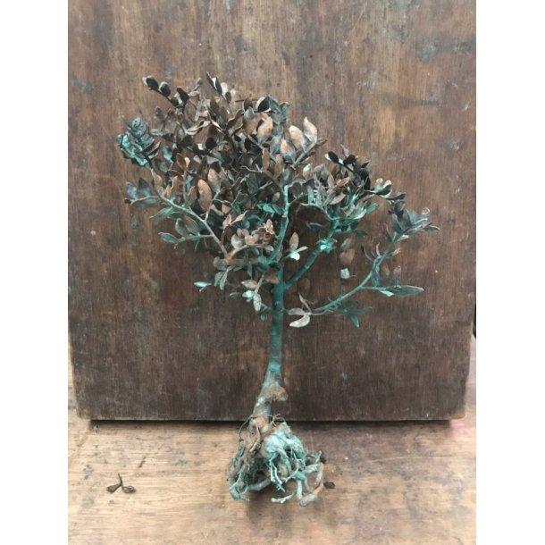Pistagetræ m. rod